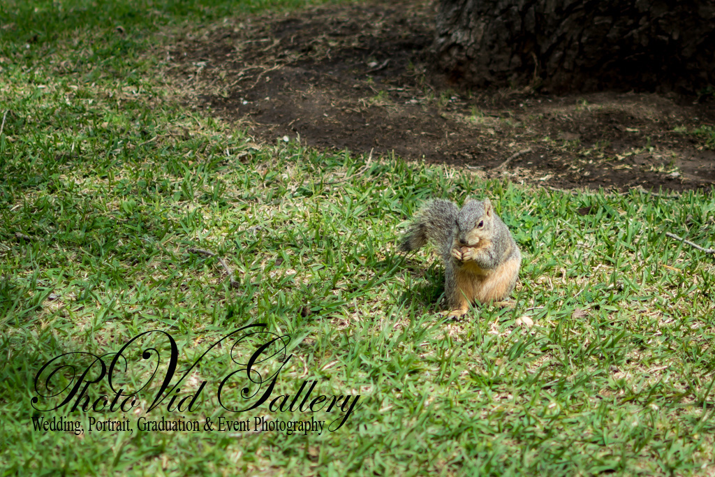 Squirrel is posing for our Nikon 35mm 1.8G
